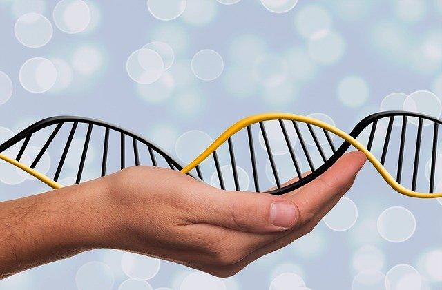 genoma test